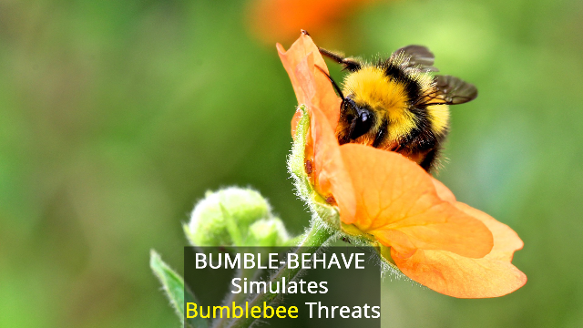 Bumblebee Threats Tested in 'Virtual Safe Space'