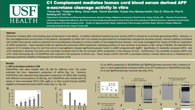 C1 Complement mediates human cord blood serum derived APP α-secretase cleavage activity in vitro
