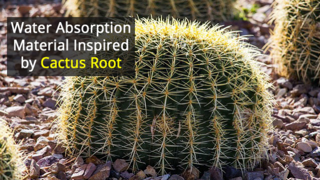 Cactus Root Inspires Innovative Material
