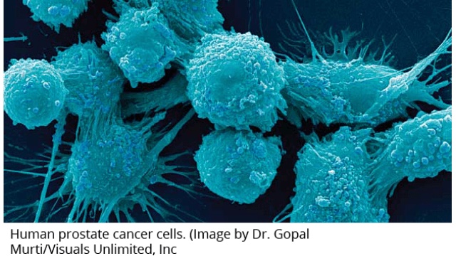 Cancer Cells Thrive Amid Genetic Chaos