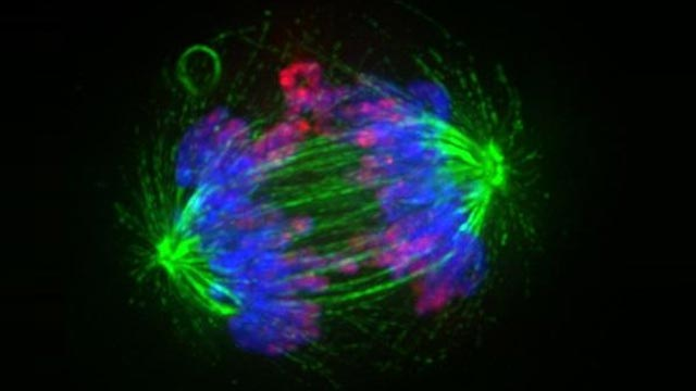 Cancer Drug Tactic Could Spell Double Trouble for Tumors