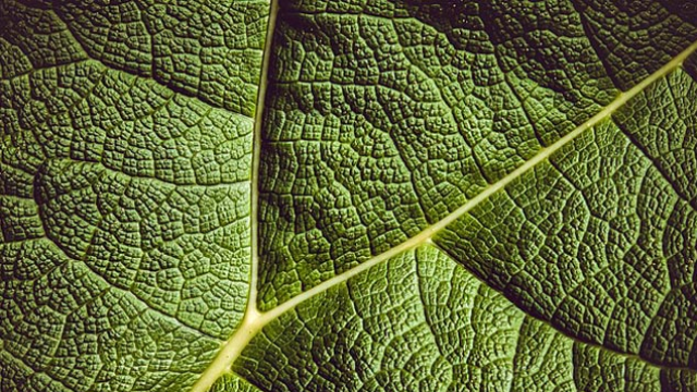 Cancer-Fighting Drugs Also Help Plants Fight Disease