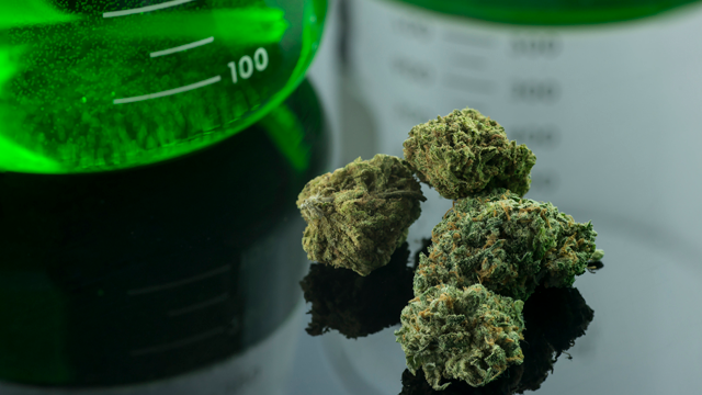 Cannabis and Terpenes: What Do We Really Know?