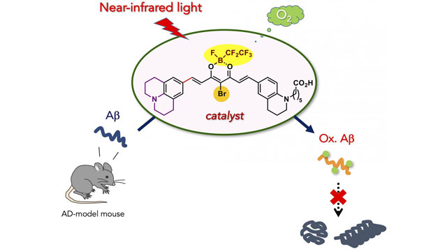 Catalyst Can Degrade Alzheimer's-Related Amyloid Peptide Under Near-Infrared Light