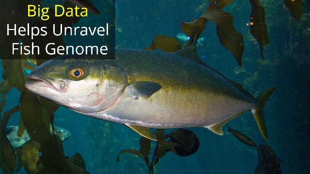 Catching a Big Fish Genome Requires Big Data