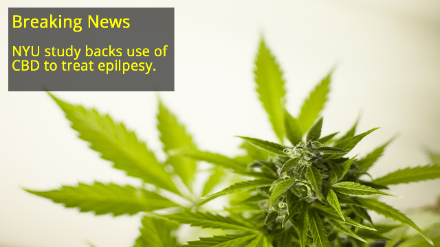 CBD Significantly Reduces Seizures in Patients with Severe Form of Epilepsy