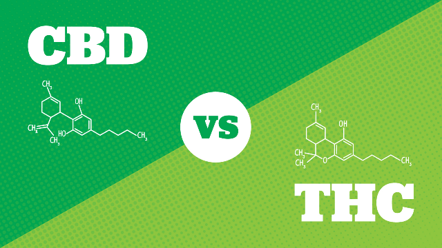 CBD vs THC – What are the Main Differences?