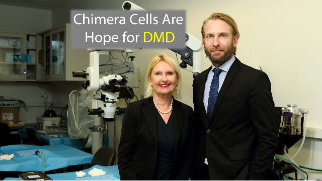 Cell Chimeras Provide Muscular Dystrophy Breakthrough