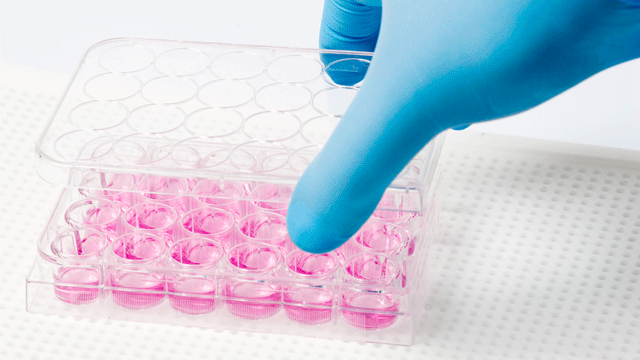Cell Culture Quality Control: Blissful Ignorance?