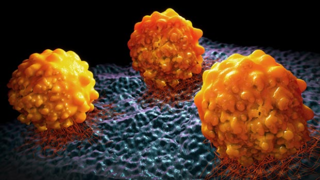 Cell Model Passports Provide Info on Cancer Cell Models