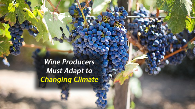 Changing Grape Varieties to Cope with a Changing Climate