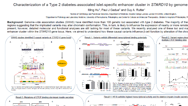 Characterization of a Type 2 diabetes-associated islet-specific enhancer cluster in STARD10 by genome editing of EndoC-βH1 cells