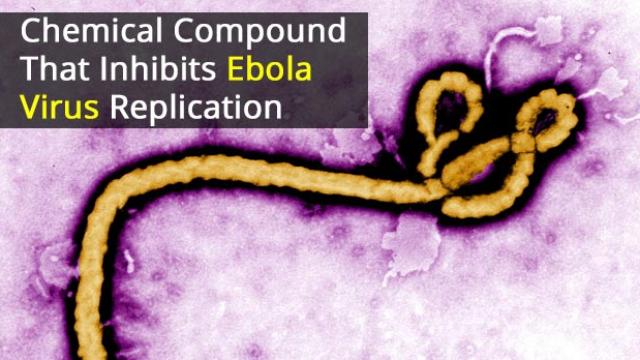 Chemical Compound Inhibits Ebola Virus Replication