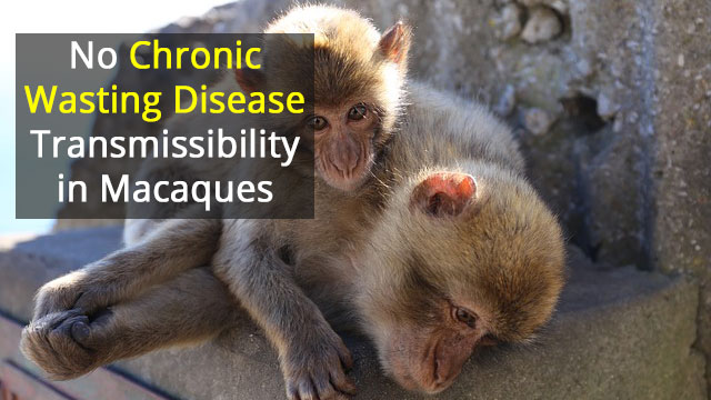 Chronic Wasting Disease Didn't Cross Into Primates
