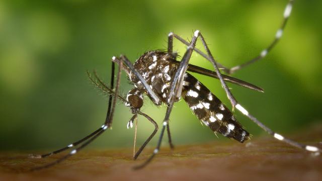 Clinical Trial of Vaccine for Chikungunya Virus Begins