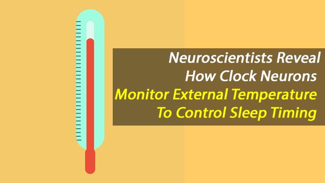 Clock Neurons Constantly Monitor Environmental Temperature To Control Sleep