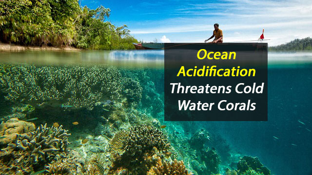 Cold-Water Corals Threatened By Ocean Acidification