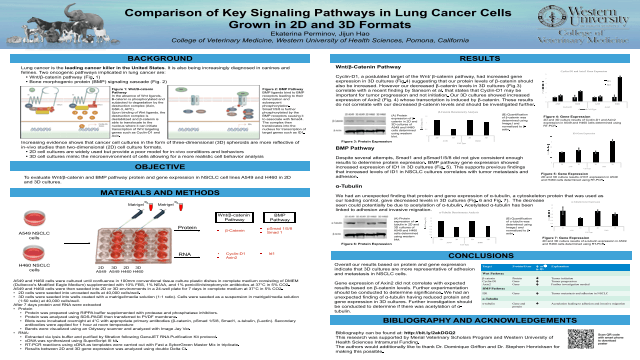 Comparison of Key Signaling Pathways in Lung Cancer Cells Grown in 2D and 3D Formats