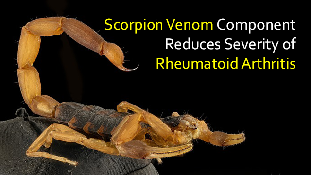 Component Found in Scorpion Venom Reduces Rheumatoid Arthritis Severity