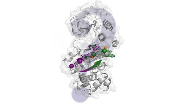 Computational Methods Describe Key Protein in Unprecedented Detail