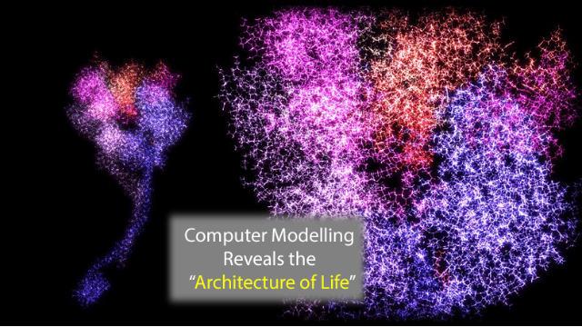 "Computer Model Describes the ""Architecture of Life"""