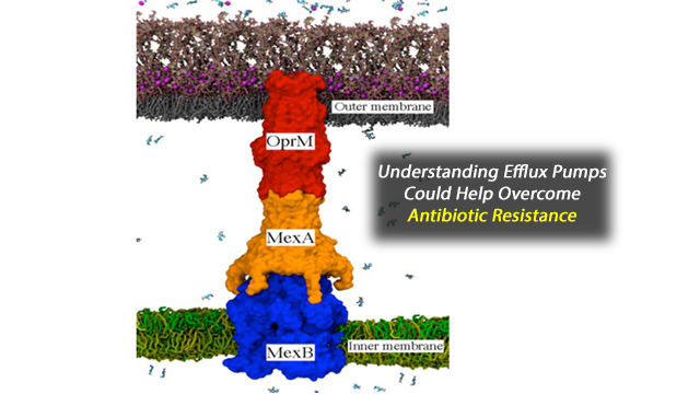 Computer Simulations Reveal Roots of Drug Resistance