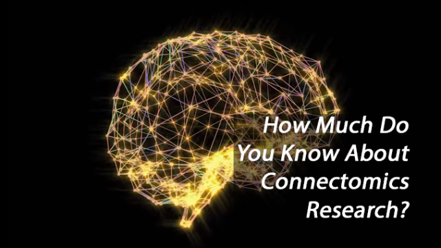 Connectomics Quiz: how much do you know about brain wiring?