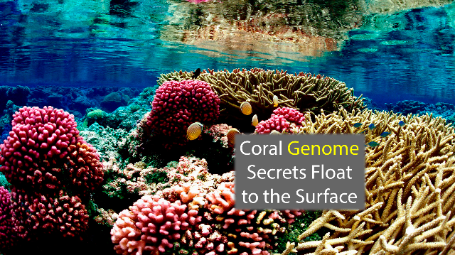 Coral Genome Sequencing Identifies Evolutionary Differences