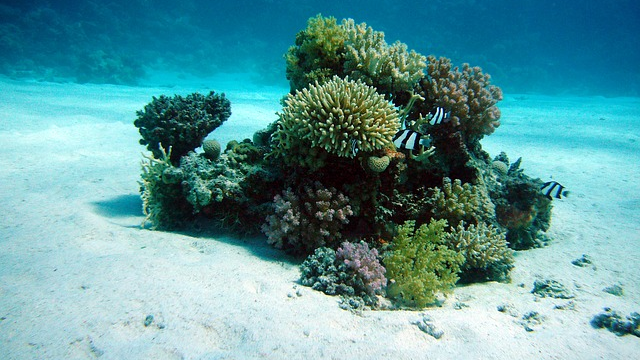 Corals and their Microbiomes Evolved Together