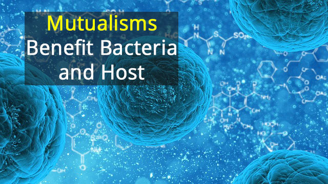 Could We Work With Our Bacteria to Prevent Infection?