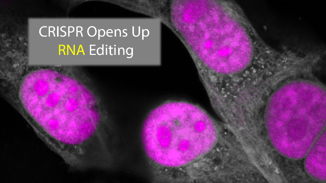 CRISPR Innovation Opens up RNA Editing