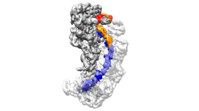 CRISPR Mechanism of Action Imaged at Near-atomic Resolution