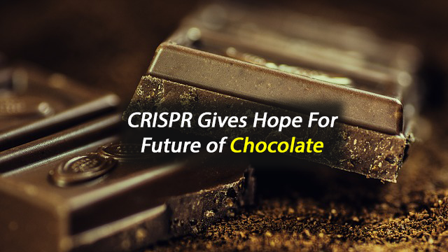 CRISPR Put to Work to Save Chocolate from Devastation