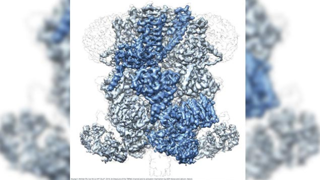 Cryo-EM Reveals Potential Drug Target for Neurological Conditions