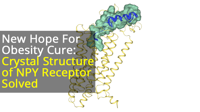 Crystal Structure of Neuropeptide 1 Receptor Solved, Providing Therapeutic Angle For Obesity Treatment
