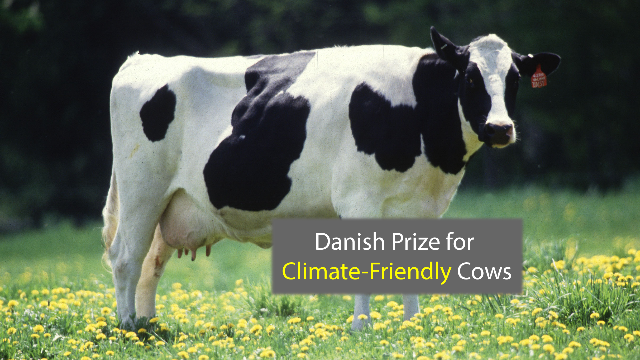 Danish Prize Goes to Geneticists for Climate-Friendly Cows