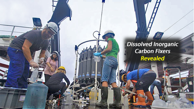 Deep Ocean Bacteria Discovered to Play Large Role in Carbon Capture