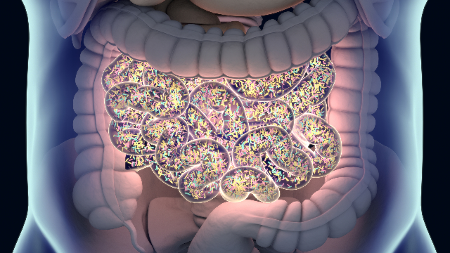 Depleting the Microbiome With Antibiotics Can Affect Glucose Metabolism