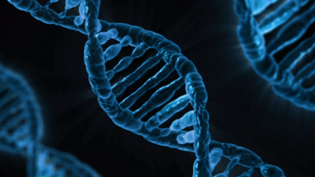 Developing a Next-Generation Forensic DNA Analysis Platform