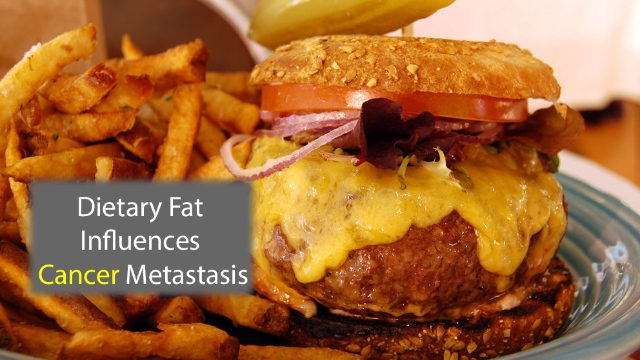 Dietary Fat Metabolism May Promote Metastasis
