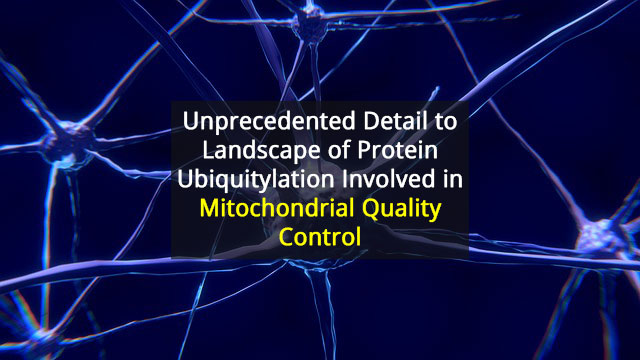 Digital Snapshots' Reveal Proteins Involved in Mitochondrial Quality Control