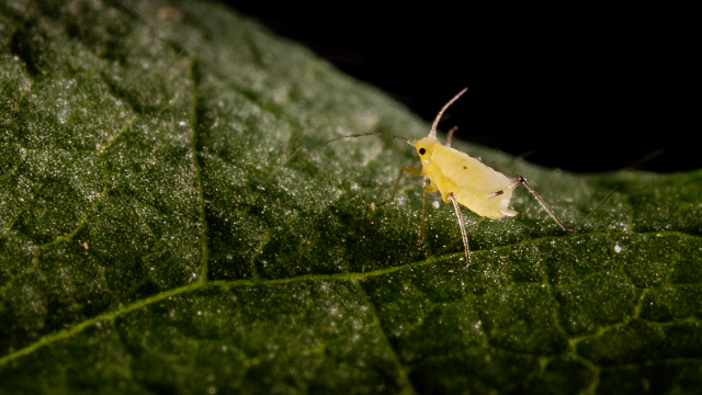 Discovering New Genes in Pest Species