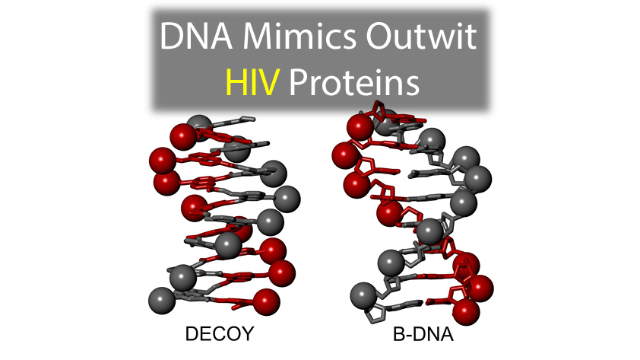 DNA Mimics Outwit HIV