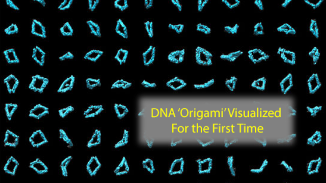 DNA 'Origami' Seen in 3-D for the First Time