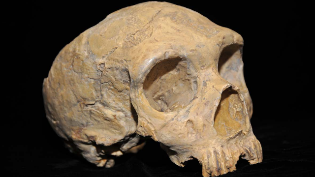 DNA Study Contradicts Conventional Wisdom On the Origin of Modern Humans