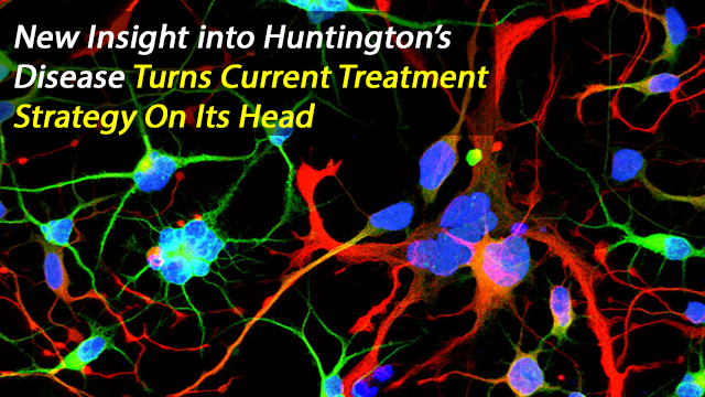Early Origins of Huntington's Disease Research Reveals a Lack of HTT Activity and Multiple Nuclei in Neurons