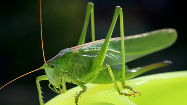 Eating Crickets could be Good for your Gut