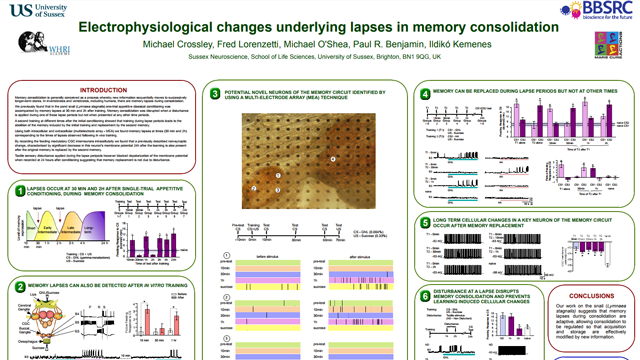 Electrophysiological Changes Underlying Lapses in Memory Consolidation