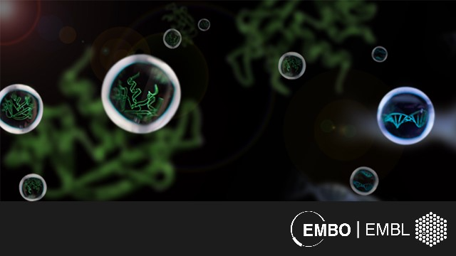 EMBO | EMBL Symposium: Cellular Mechanisms Driven by Liquid Phase Separation