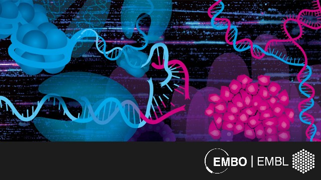 EMBO | EMBL Symposium: DNA Replication: From Basic Biology to Disease